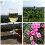 Schee wars: Weinwanderung in Jugenheim