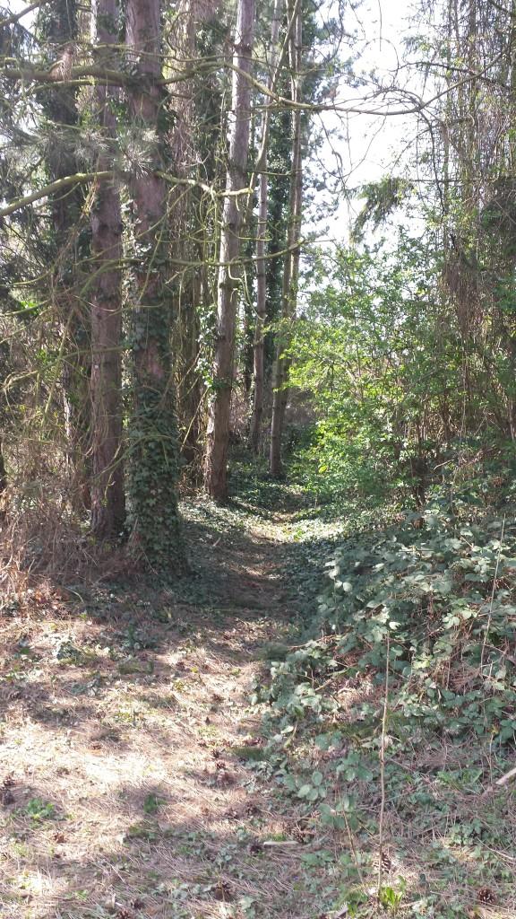 Zum Grundstück gehört sogar ein kleiner Wald. Hier lassen sich auch wunderbare Aufnahmen machen