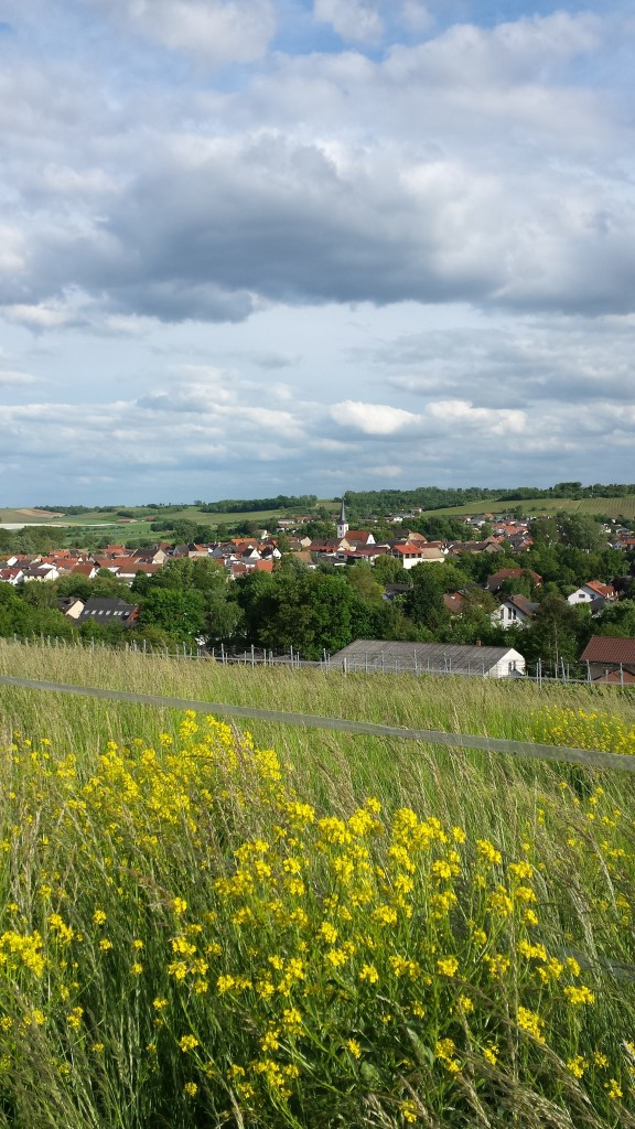Traumhafter Blick über Elsheim
