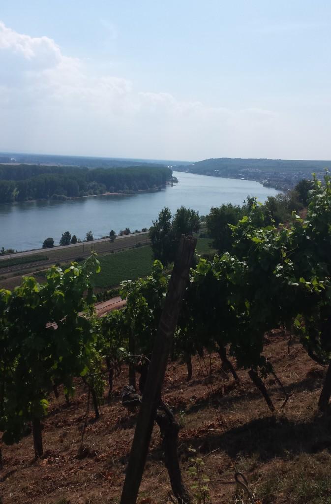 Sensationeller Blick auf den guten alten Rhein