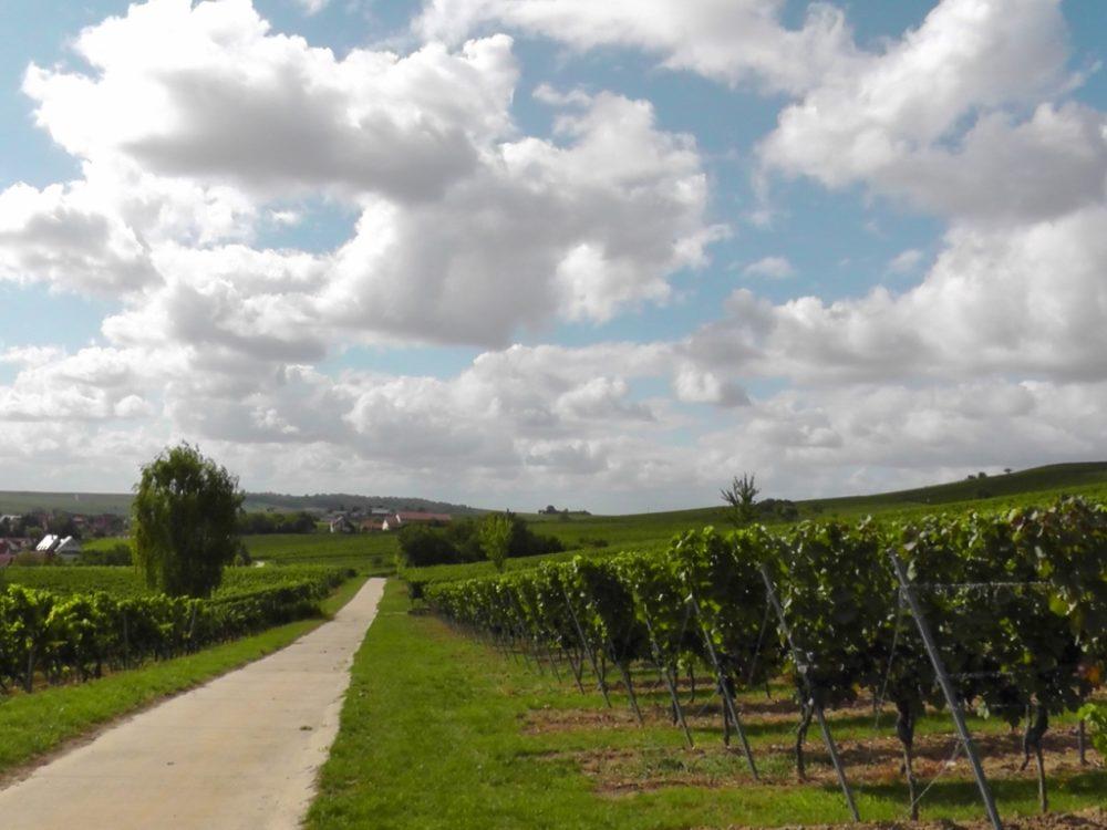 Bodenheimk.p.S3760057