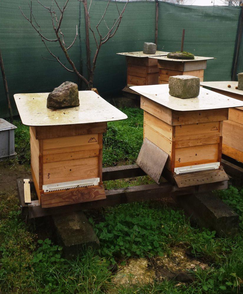 geschleudert meist ger hrt honig aus ingelheim werbung rheinhessenliebe. Black Bedroom Furniture Sets. Home Design Ideas