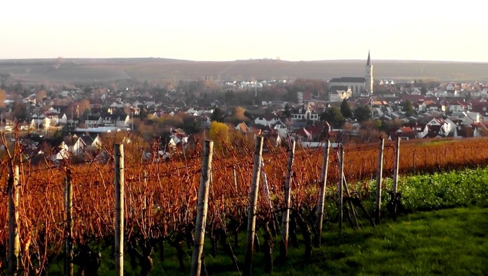 Blick auf Bodenheim