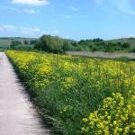 Warum in die Ferne schweifen? Kleine Radtour nach Partenheim und Stadecken-Elsheim