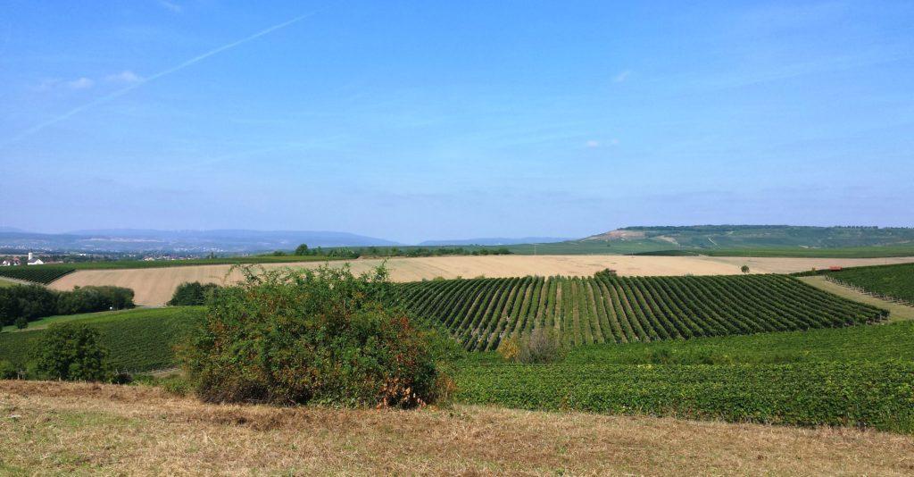 Herrlicher Panoramablick 2. Oder wie Herr Rheinhessenliebe sagen würde: En scheene Guck