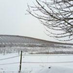 Rheinhessen. Ein Wintermärchen!