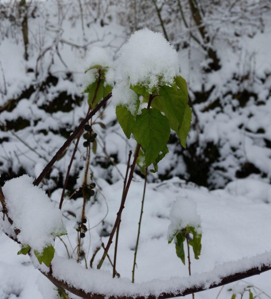 Winter Rheinhessen