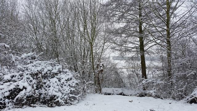 Rheinhessen Winter