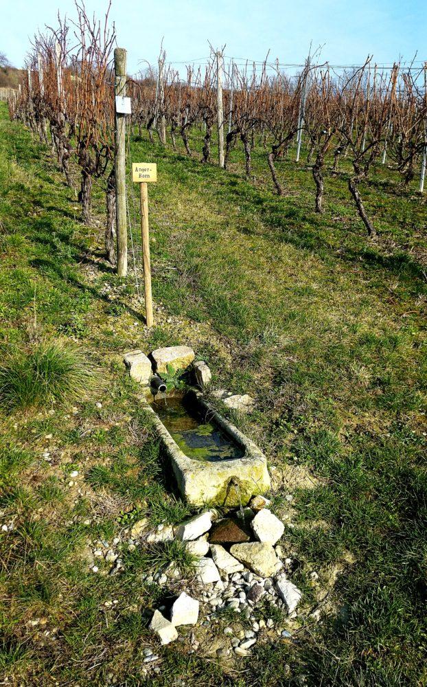 Brunnen Wanderung Jugenheim Rheinhessen