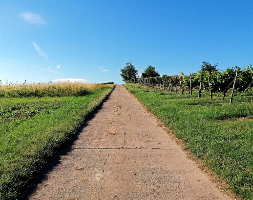 Biblischer Weinpfad Partenheim