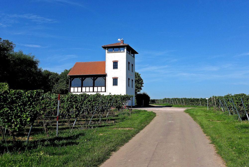 Wandern in Rheinhessen: Hiwweltour Stadecker Warte