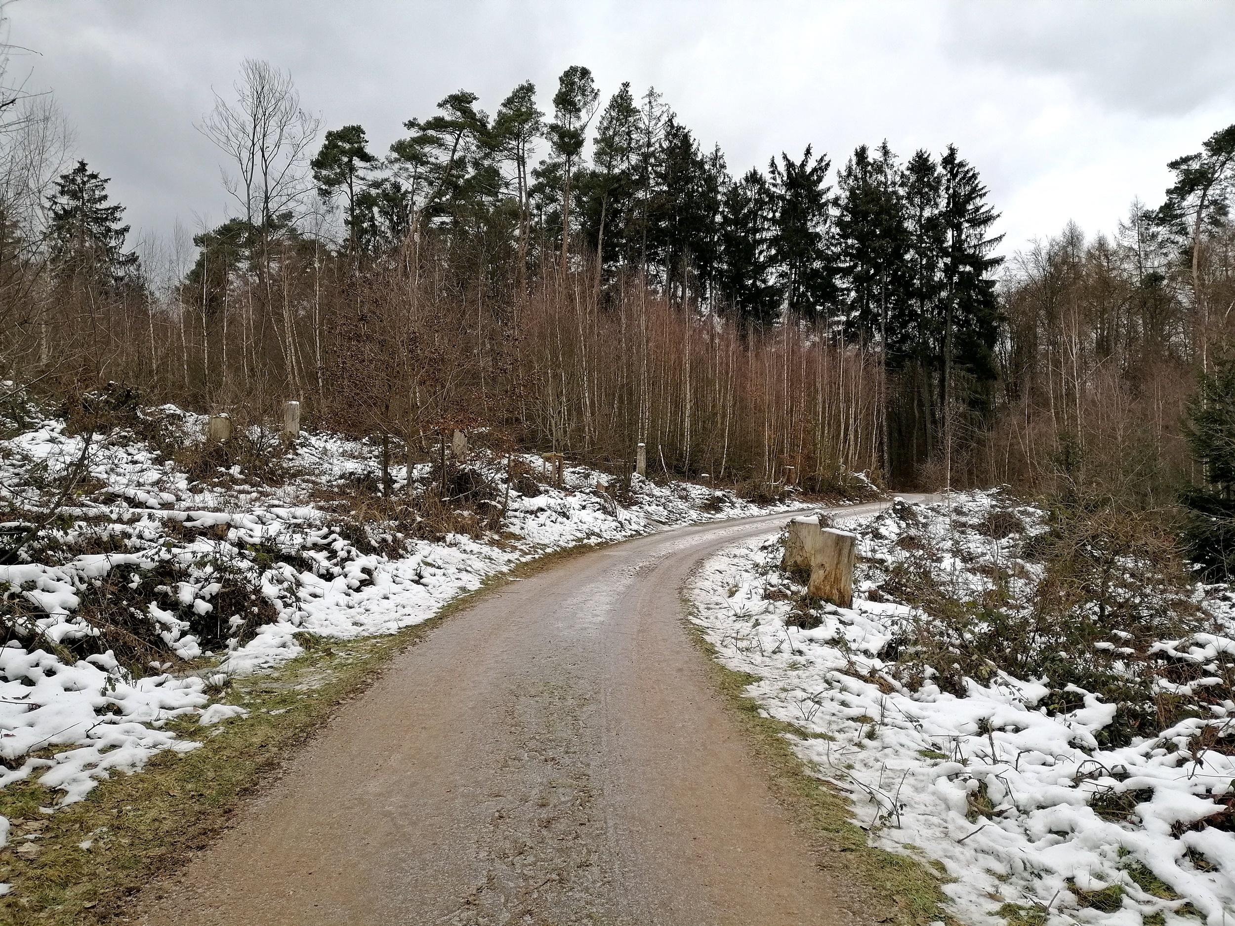 Erlebnispfad Binger Wald Natur
